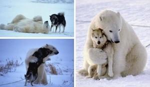 Kasih sayang Binatang-014
