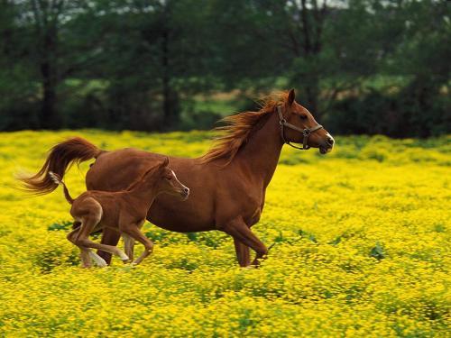 wallpaper kuda, gambar kuda